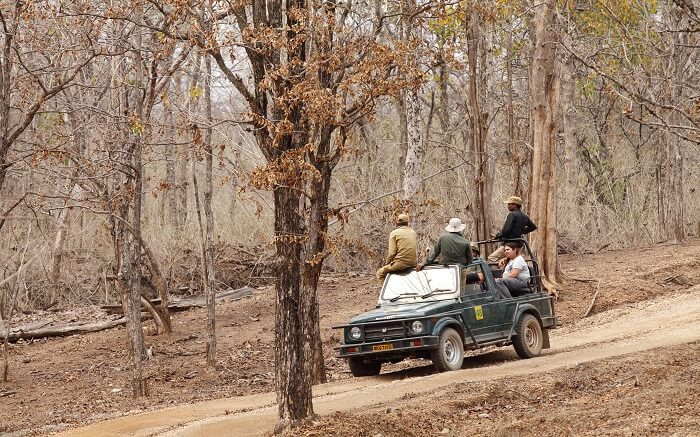 Travelers enjoying a safari ride in Pench National Park