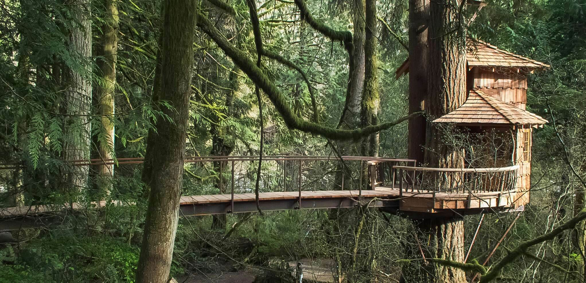 A view of Treehouse Point in Washington tucked on a tree