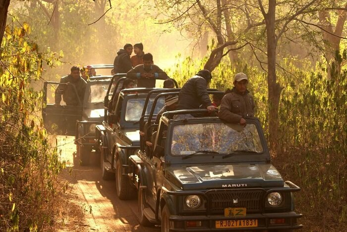 Sariska Jeep Safari cost