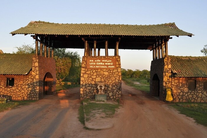 Yala National Park Safari Timings