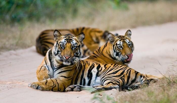 Bandhavgarh Tiger Reserve in India