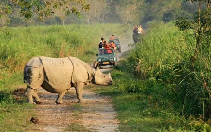 acj-1910-kaziranga-national-park-11