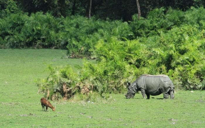 acj-1910-kaziranga-national-park-15