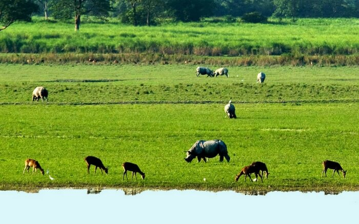 acj-1910-kaziranga-national-park-18