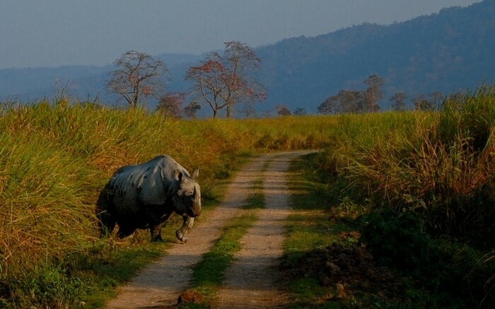 acj-1910-kaziranga-national-park-7