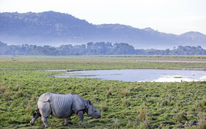 acj-1910-kaziranga-national-park-9
