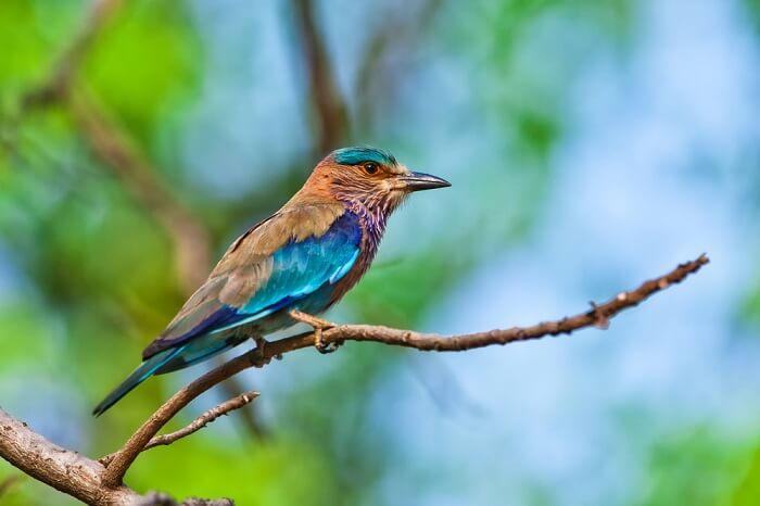 bird watching Bandhavagrh