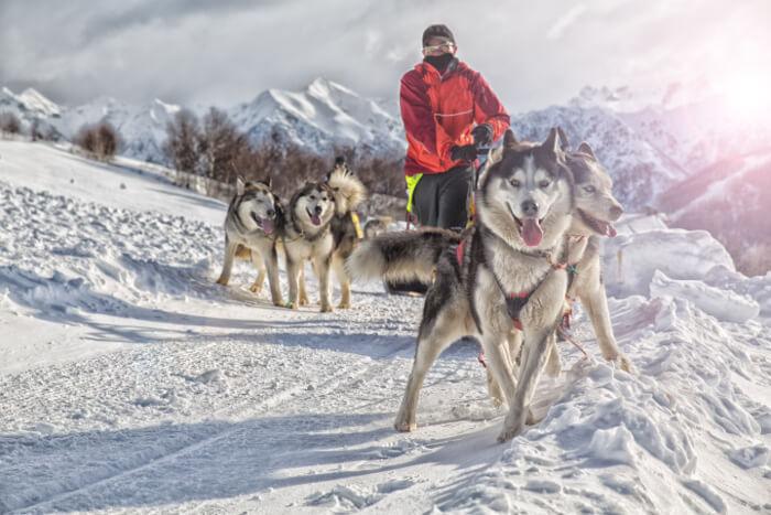 have a fun dog sled in alaska