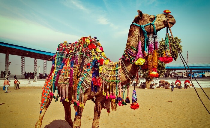 photography contest pushkar fair