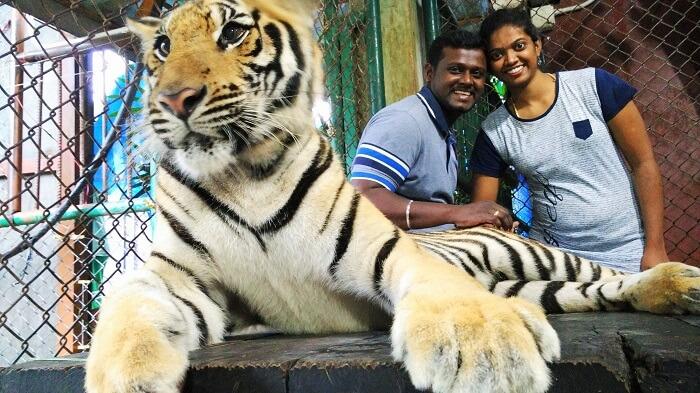 Tiger Kingdom in Phuket