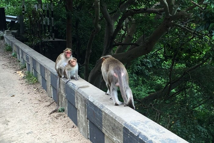 Monkeys in Thekkady