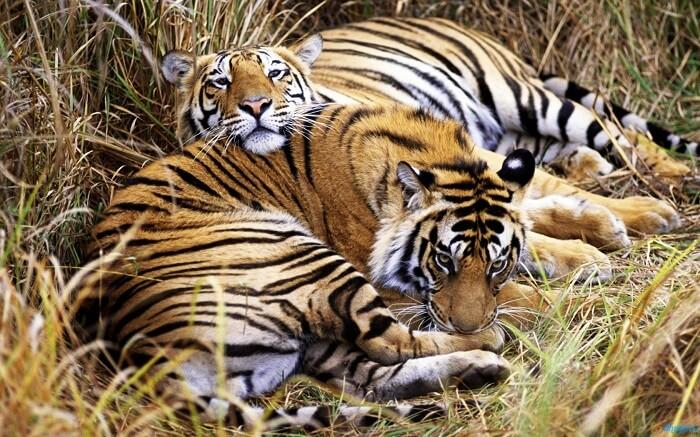 Indira Gandhi Wildlife Sanctuary Coimbatore