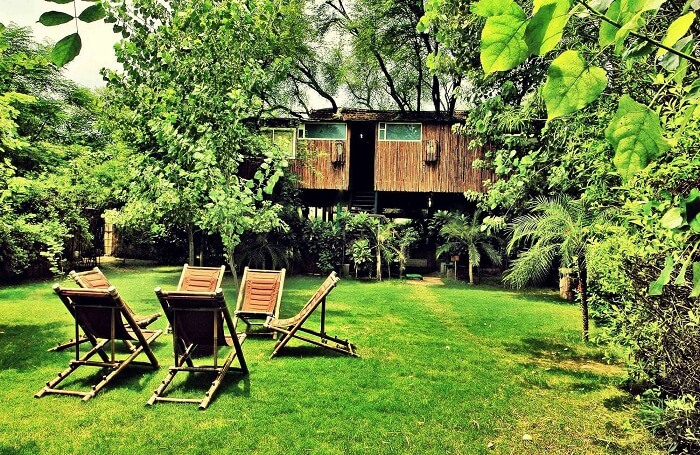Treehouses in Jaipur