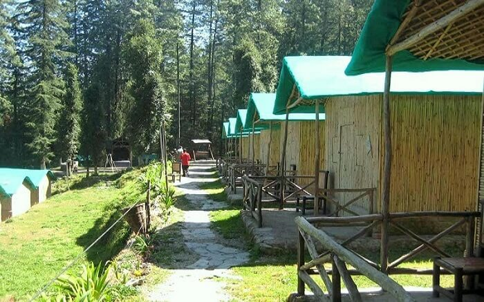 A beautiful view of camps of Mashobra Greens Surrounded by woods