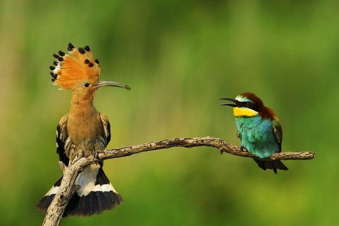 visit Asola Bhatti Wildlife Sanctuary near surajkund