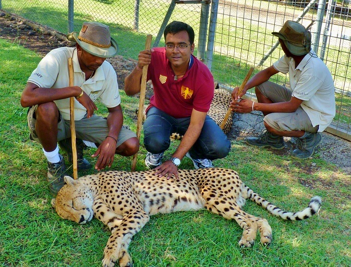 interaction with cheetah