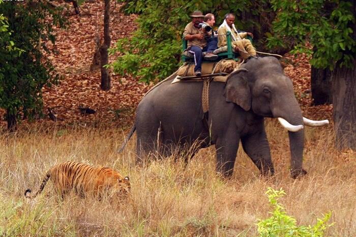 Elephant Safari in mudumalai park