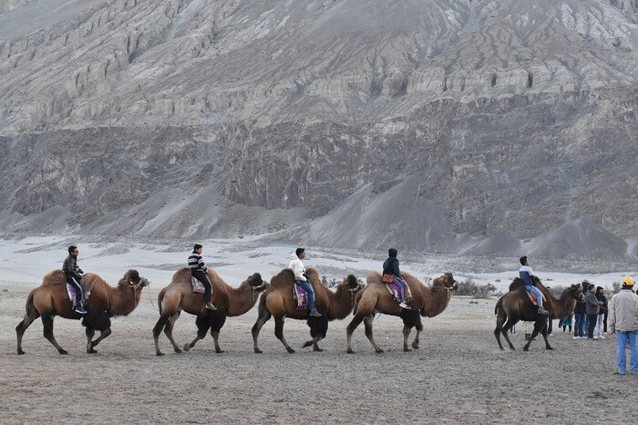 lokpal romantic trip to ladakh: camel riding