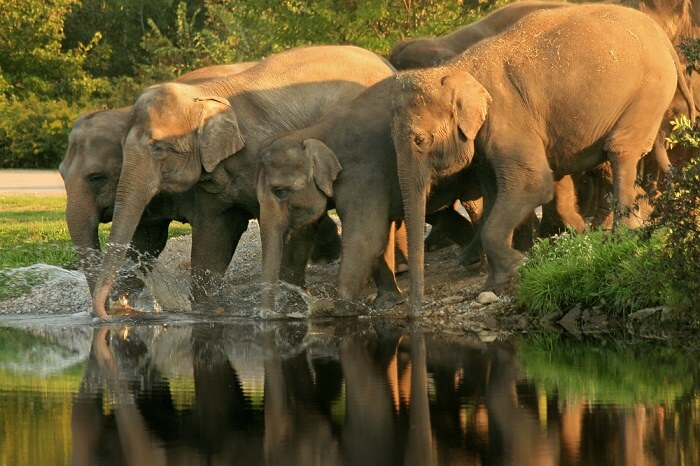 Ideal Duration Of A Trip To Mudumalai National Park