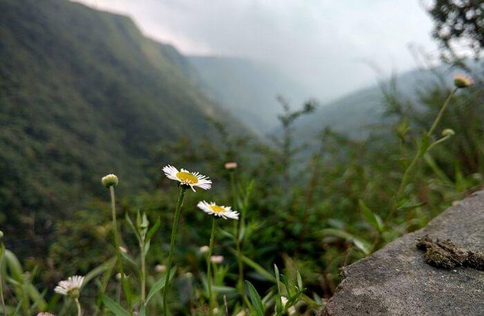 Mawkdok Dympep Valley View
