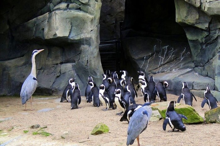 Meet giraffes & camels at the Amsterdam Zoo - penguins