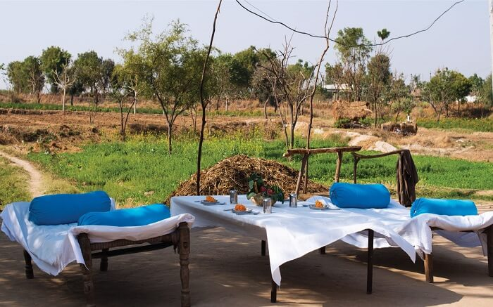 Open field breakfast in Lakshman Sagar Resort