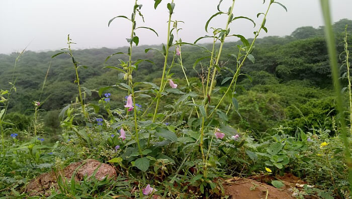 Flowers View