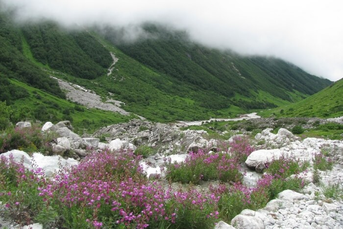 Valley Of Flowers National Park