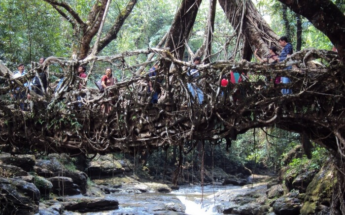 Root bridges Shillong for a perfect romantic hideout