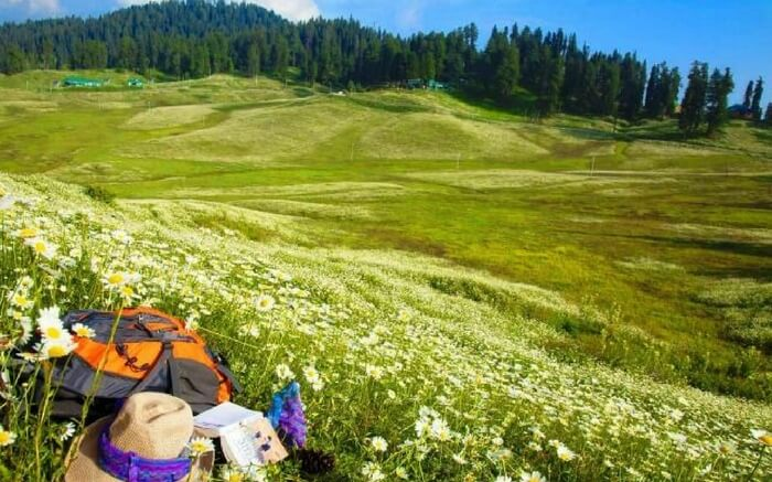 Gulmarg blessed with the blossoming wild flower laden landscapes