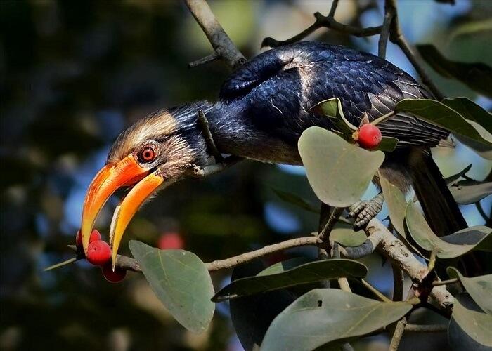 species of birds in dandeli