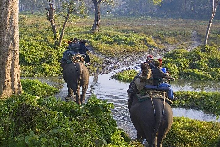 elephant safari in mudumalai