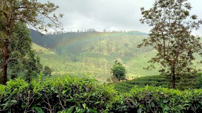 sightseeing in nuwara eliya