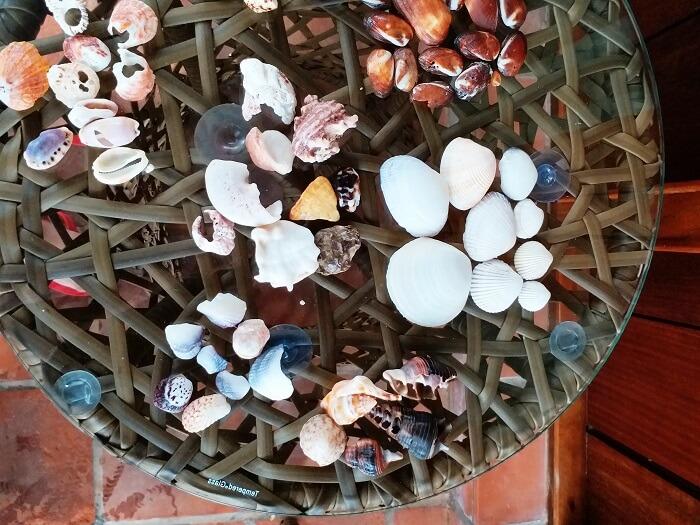 Sea Shells in Andaman