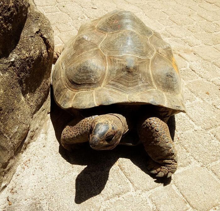 Turtles in Seychelles