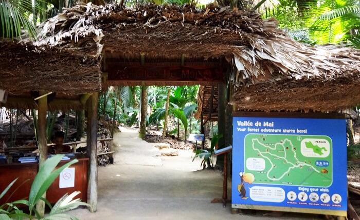 Valle de mai, Praslin Island
