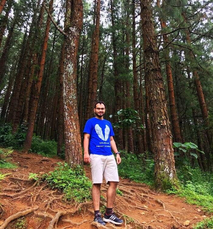 Pine Grove Forest, Kerala