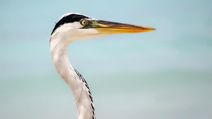 sandeep seychelles trip: egret
