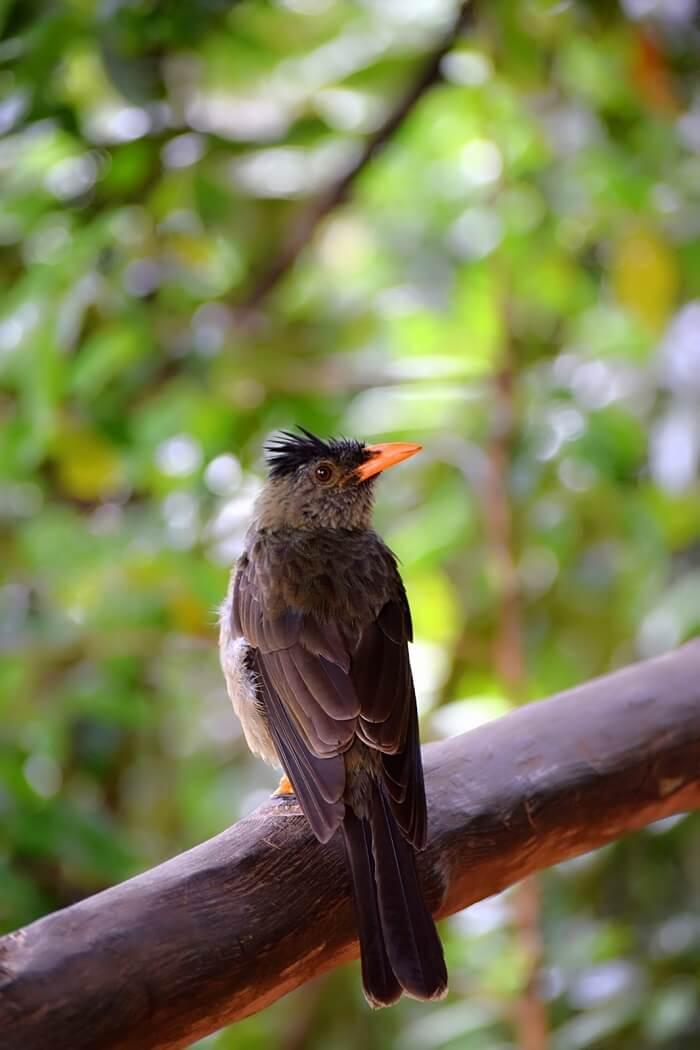 sandeep seychelles trip: seychelles bird