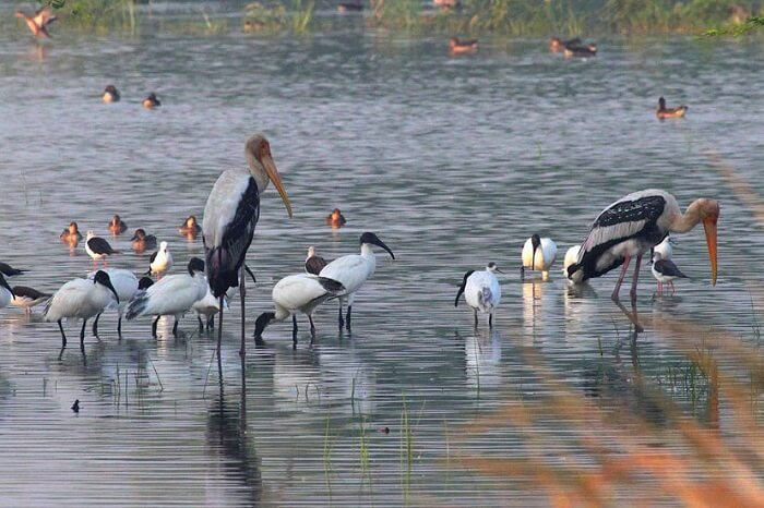 Best Time To Visit Sultanpur Bird Sanctuary