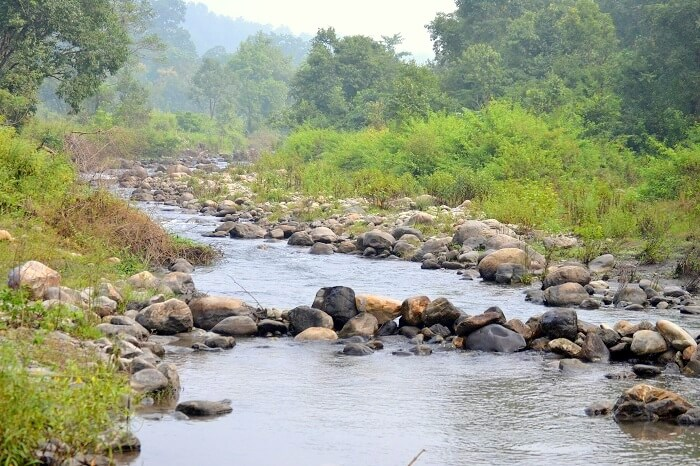 river stream near jim corbett
