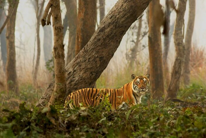 Dudhwa National Park cover