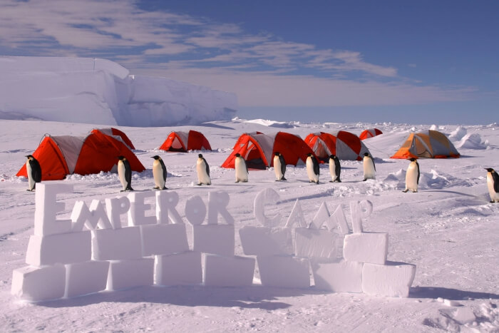 Emperor Penguin Camp in Antarctica