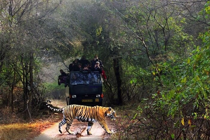 Engage In Jungle Safari At Dudhwa