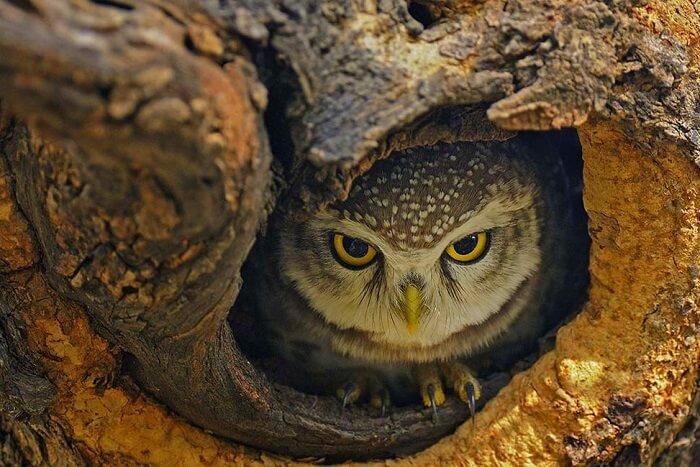 sultanpur bird sanctuary cover