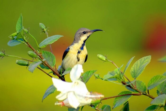 Traveler Reviews For Sultanpur Bird Sanctuary