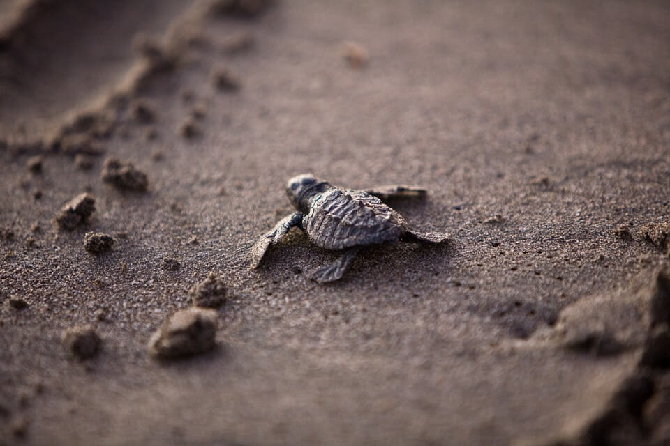 a small turtle on a beach