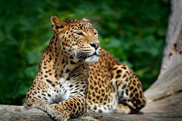 https://d27k8xmh3cuzik.cloudfront.net/wp-content/uploads/2017/12/leopard-in-sultanpur-bird-sanctuary.jpg