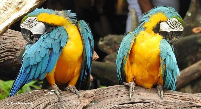 macaw safari