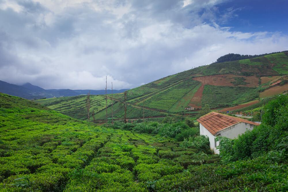a house amid the tea plantations